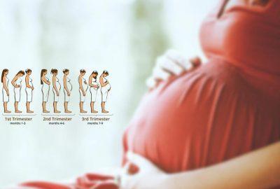 ระยะของการตั้งครรภ์คืออะไร? คำอธิบายภาคการศึกษา